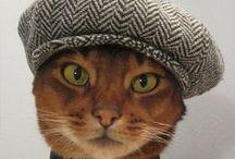 Cats ^_^