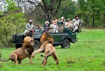 Animal Encounters / From the Big 5 to the Little 5, Southern Africa's animals are magnificent!