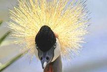 aves / by salus bejarano