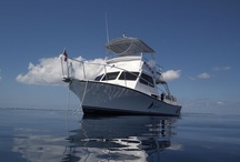 Our Dream Boat / The best dive boats in Grand Cayman.  We have spent our lives planning what is the best boat to dive on and we are proud of 'Our Dream Boat'