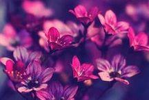 Garden Dream <3