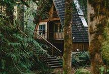 Domki w lasu