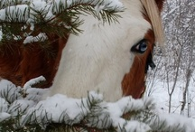 """Wild Horses"" / by Toni Trombetta"