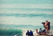 Surf dreamin'