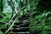 Puzzlewood forest