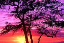 Pretty landscapes