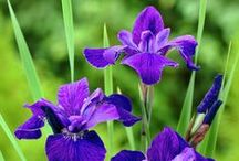 Brian and Iris / Planting ideas for the garden