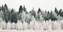 • woods •