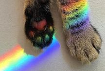 • rainbow •