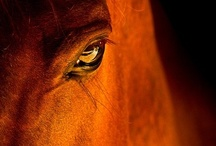 For the Love of the Horse / He is pure air and fire; and the dull elements of earth and water never appear in him; he is indeed a horse 