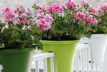 Go green! / green, nature, eco, enviroment, garden, open spaces