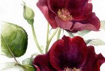 Botanical love / Ilustraciones de botánica, inspiración...