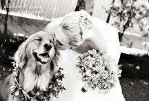 Wedding Photography / by Mel Wall