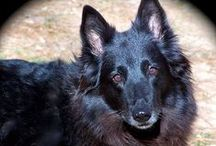 FURY FRIENDS / My personal family of Dogs/Cants and additional pictures of animals....