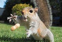 Живые забавности / Фотки милых, симпатичных, смешных, необычных... разных животных