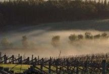 Fog & Mist / Mornings are stunning at Mount Langi Ghiran, the mist and frosty mornings might be the most breathtaking ones. #landscape #vineyard #fog #mist #nature