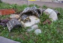 Moje želvy / testudo herrmani