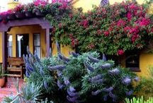 Plants that Beat  the Heat