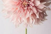 Flower power ✿