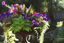 "Container Gardening ""Plants and Flowers"""