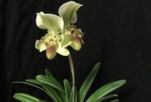 Orchids and their Care