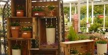 Container Displays / Hillier Garden Centre -  Container Displays - showcasing our plants in amazing and inspiring ways