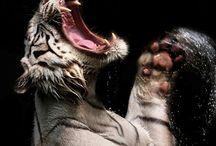 Animals :) / Beautifull Creatures