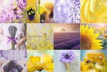 Flowers~ / In ogni respiro della natura c'è il mistero della vita~