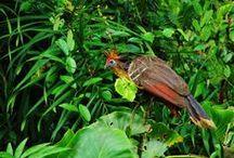Fauna Marasha Tours / www.reservamarasha.com