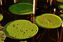 Flora Marasha Tours / www.reservamarasha.com