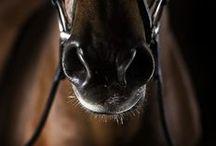 Equestrian / Equestrian Horse riding Horse Лошади Конный спорт Dressage Jumping