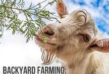 Homestead Dairy / Raw Milk, Milk Cows, Milk Goats, Cheese, Milking, Dairy, Homesteading, Homestead Dairy
