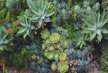 Garden Love - inspiration