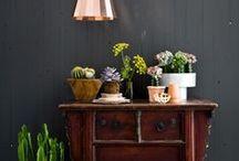 Plants / Plants indoor