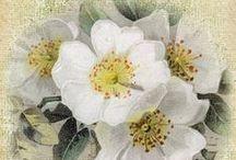 fiori stampe vintage 2