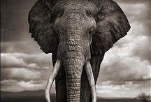 Animals / animals, puppys, dogs, lions, éléphant....