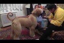 4 lábú családtagok / A családunkban élő 4 lábúakról (kutyák macska) készült videók láthatók.
