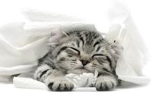 Kitten / Love love love