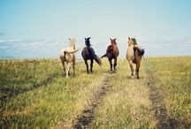 Horses / The wind of heaven is that which blows between a horses ears.