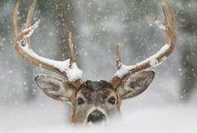 Winter ❄