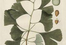 herbier..botanicals