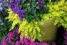 Gardening - Container Gardens / by Laura Anstead