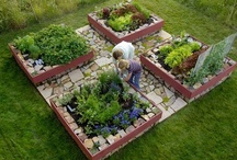 Gardening (Vegetable - Fruit - Herb) / by Laura Anstead