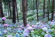 La Beauté De La Nature