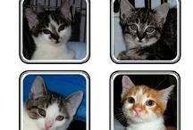 ATTN. ALL CAT/PET <3'rs