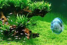 Aquarien & Diskus / Besondere Umsetzung von Aquarien und Diskusbecken