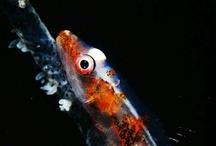 Under Water Life / Under water