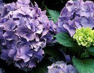 Jardinería / La jardinería es el arte y la práctica de cultivar los jardines. Consiste en cultivar, tanto en un espacio abierto como cerrado (arriates), flores, árboles, hortalizas, o verduras (huertos), plantas en general, ya sea por estética, por gusto o para la alimentación, y en cuya consecución el objetivo económico es algo secundario.