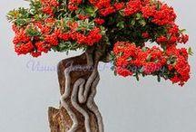 bonsai / by Ana Gregório