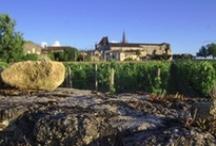 Vins de Bordeaux / Les bouteilles des vins de Bordeaux, mises en lumière ou au naturel, prémices à la dégustation